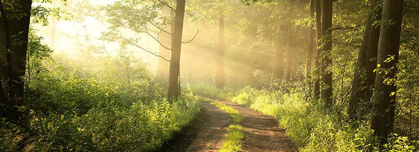 forest-sunshine-road
